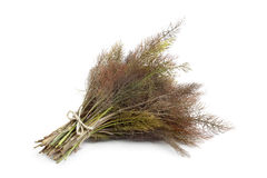 Bronze fennel. On white background royalty free stock image