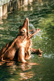Bronze Frog. Source Latona The Frogs Royalty Free Stock Photos