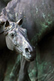 Bronze horse Stock Images