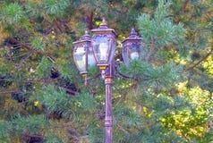 Bronze lantern of street lighting, against the background of pine. Retro. stock image