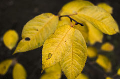 Bronze leaves Stock Image