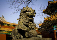 Bronze Lion. In The Lama Temple of beijing china Royalty Free Stock Photography