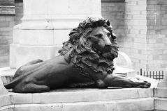 Bronze lion Royalty Free Stock Photo