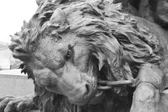 Bronze lion statue. Bronze lion statue on the island of San Marco in historic part of Venice, Italy. Black and white stock images