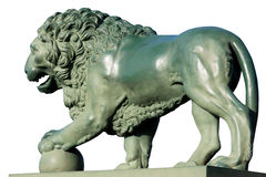 Bronze Lion on a white background Stock Image