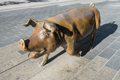 Bronze pig at Rundle Mall named Augusta Stock Image