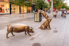 Bronze Rundle Mall Pigs. Adelaide, Australia - April 05, 2017: Four famous Rundle Mall Pigs after restoration and repavement in Adelaide CBD on a day.  This Royalty Free Stock Photo