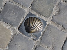 Bronze Shell Symbol of the Pilgrims of Saint James on Cobblestones. The iconic shell symbol for religious pilgrims on the Way of Saint James, in Bruges, Belgium Stock Image