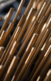 Bronze spines Stock Photos