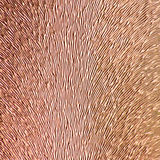 Bronze Sprout Background Stock Photos