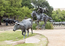 Bronze Steers and Cowboy Sculpture Pioneer Plaza, Dallas Royalty Free Stock Images