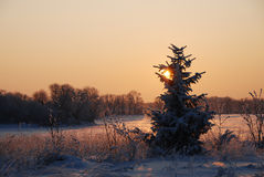Bronze winter scene Royalty Free Stock Photos