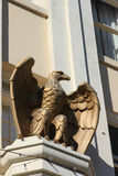 Bronzeadler Lizenzfreies Stockbild