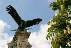 Bronzeadler gegen blauen Himmel und blühendes chestn Stockfoto