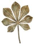 Bronzekastanieblatt. stockbild