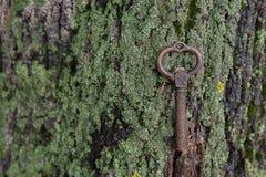 Bronzeschlüssel ist der Ehemann und die Baumrinde Lizenzfreie Stockfotos