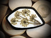 Brooch with pressed plant Royalty Free Stock Image