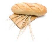 Brood en verscheidene wheatear op scherpe raad Royalty-vrije Stock Fotografie