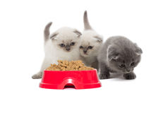 Brood of kittens Stock Images