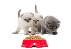 Brood of kittens and a plate of food for animals. On a white background stock photos