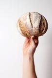 Brood van de Dag Stock Afbeeldingen