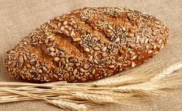 Brood van de Korrel van Seeduction het Gehele Stock Fotografie