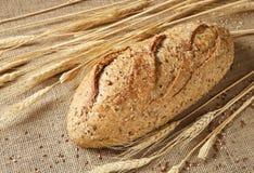 Brood van de Korrel van Seeduction het Gehele Royalty-vrije Stock Foto
