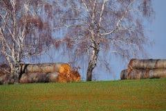 Broodjes van stro op de stapel Stock Afbeelding