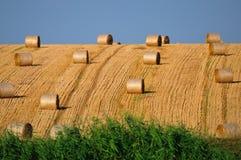Broodjes van stro op het gebied Stock Foto's