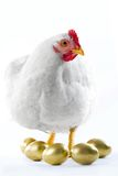 Broody hen Stock Photography