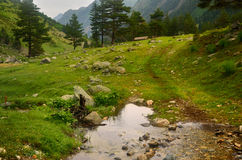 Brook. The meadow in Caucasus mountains in summer Stock Photo
