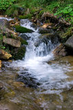 Brook. In the Romanian Carpathians, Ceahlau massif Royalty Free Stock Images