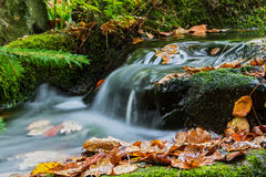 Brook in autumn with fallen leaves. Stock Image