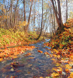 Brook in autumn forest Royalty Free Stock Images
