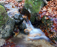 Brook in autumn forest Stock Images