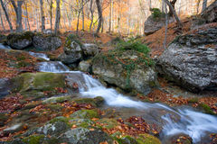 Brook in autumn forest Stock Photography