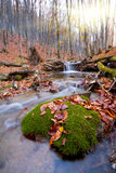 Brook in autumn forest Royalty Free Stock Photo