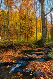 Brook in autumn forest. Beautiful nature scenery in fall colors stock photography