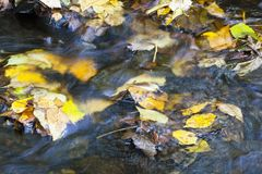 Brook with autumn leaves. Floating in the water, long exposure time Royalty Free Stock Images