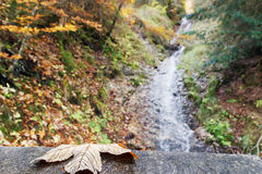 Brook in an autumn ravine royalty free stock images