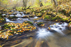 Brook in autumn Stock Photos