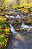Brook in autumn Royalty Free Stock Photos