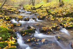Brook in autumn. In Slovakia Stock Images