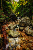 Brook in Baxter State Park, Maine. Flowing brook with wet rocks and autumn leaves Stock Photo