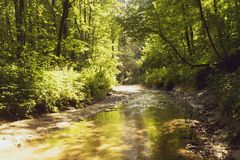 A brook in a dense forest. On a Sunny summer morning Stock Image