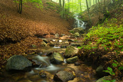 Brook in early spring with fog. Montseny, Spain. Royalty Free Stock Image