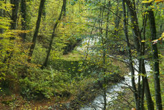 Brook flowing through forest. A view of a small winding brook or stream flowing through a Bavarian forest or wooded area with hints of autumn foliage and color Royalty Free Stock Image