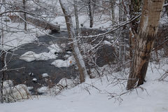 Brook flowing through the frozen forest Stock Images