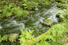 Brook flowing Stock Images