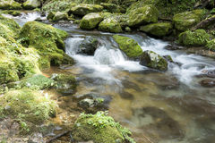 Brook flowing Royalty Free Stock Photography